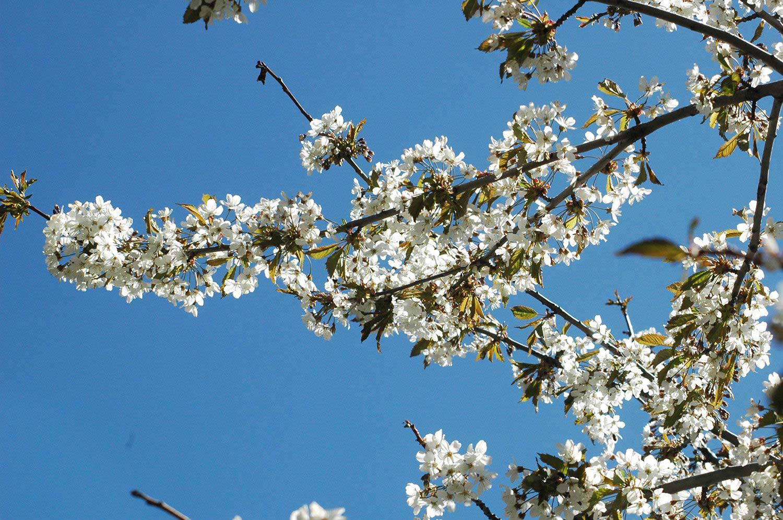 randonnee-liberte-claree-arbuste