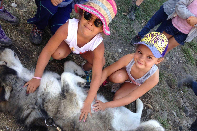 cani-rando-2-petites-filles-carressent-un-gros-chien-malamut