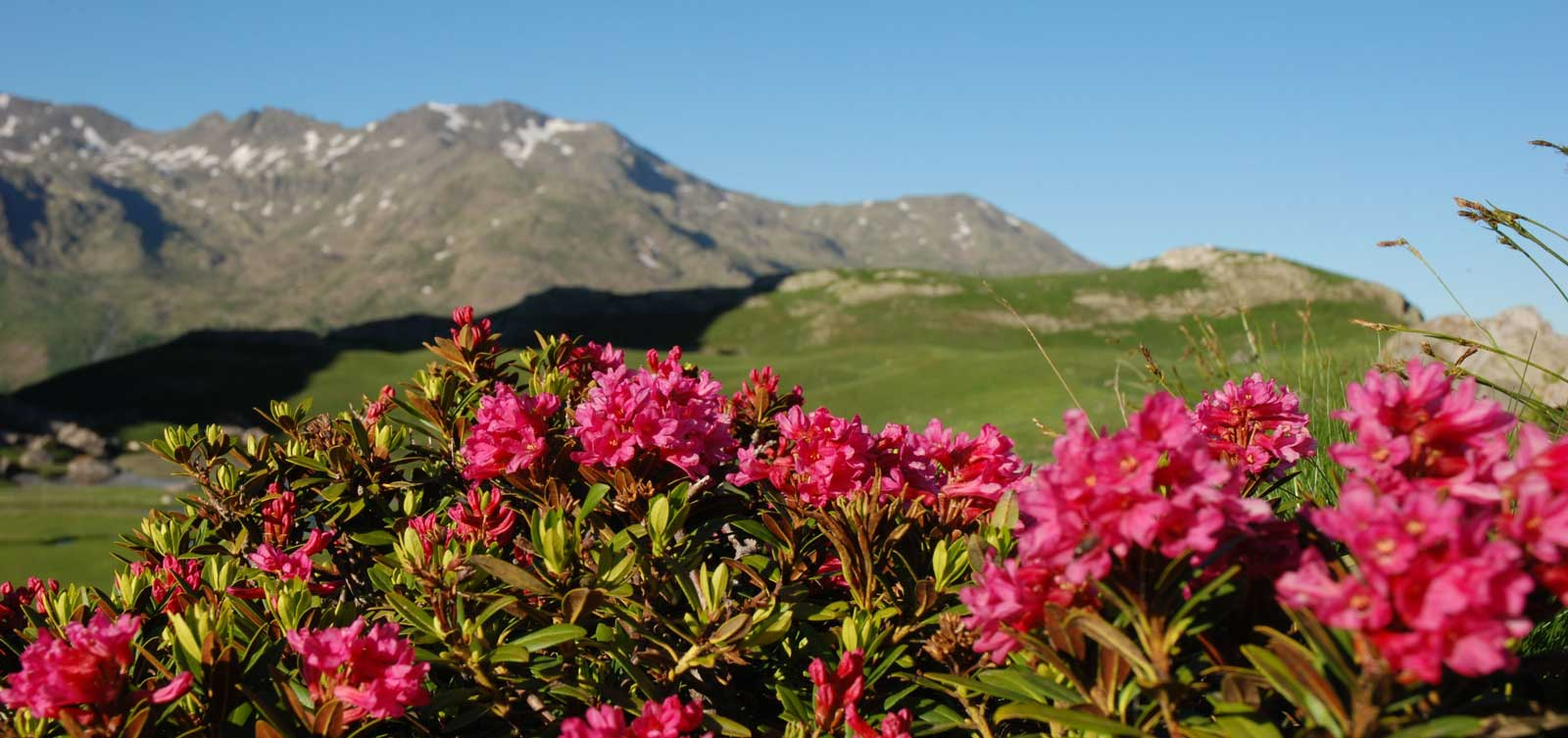 sejour-randonnee-liberte-claree-rhododendrons